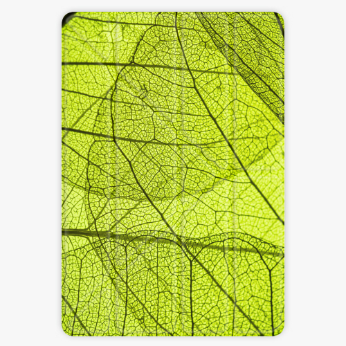 Kryt iSaprio Smart Cover na iPad - Leaves - iPad Air
